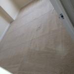Bellevue-Carpet-Clean-room