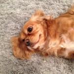 Bellevue-Dog-Poop-Cleaning