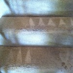 Bellevue-Stairs-Carpet-Cleaning