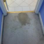 Bellevue-Vomit-before-carpet