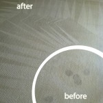 Bellevue-Wine-Stain-Carpet-Cleaning