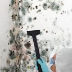 Black-Mold-Remediation-Bellevue