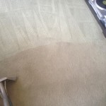 Carpet-Cleaning-Bellevue