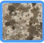 Water-Mold-Removal-Bellevue